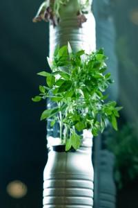 Even Urban Dwellers Can Grow Their Own Veggies